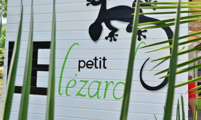Photo Le petit lézard