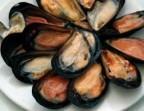 Photo Raw mussels (12)  - Le Saint Clair