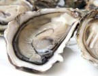 Photo Oysters from the Bassin de Thau (unit) - Le Saint Clair