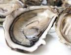 Photo Oysters from the Bassin de Thau (unit) - Le Saint Clair
