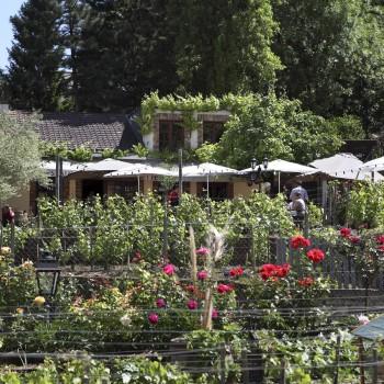 Mathieu Legrand nous donne des nouvelles du Chemin des Vignes