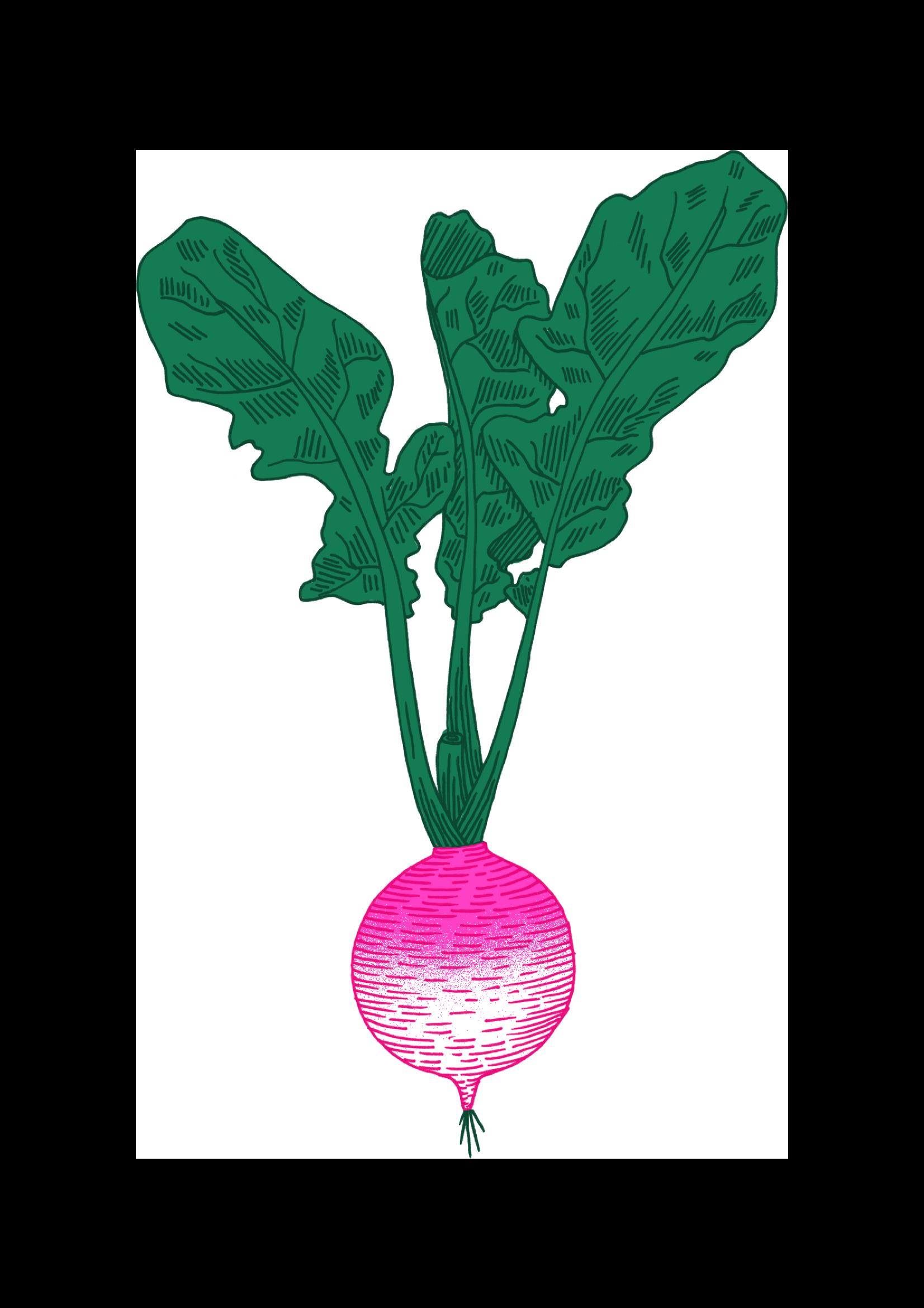 Logo Cantine Primeur