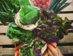 Photo Panier de légumes BIO - Colette